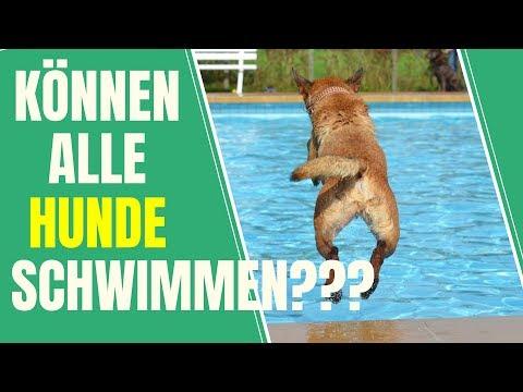 Wie bringe ich meinem Hund das Schwimmen bei? Tipps für vierbeinige Schwimmanfänger