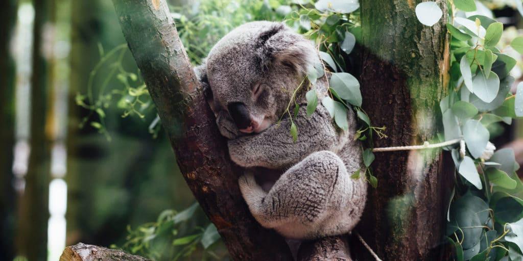 wo_schlafen_australien